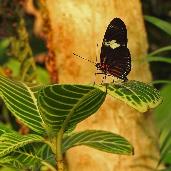 Unbekannter Schmetterling im Tiergarten Nürnberg