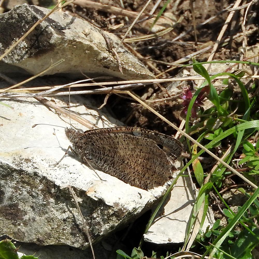 Berghexe auf Stein