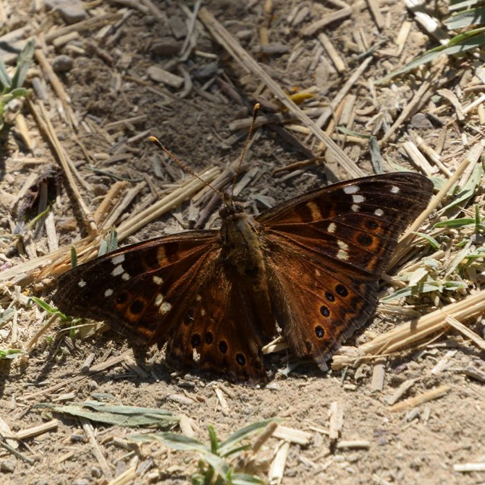 Empress Leilia am Boden (Brewster Co., Texas)
